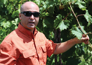 Oliver's Dennis Dunham at Creekbend Vineyard