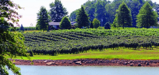 The vineyards at Huber Winery stretch over 70 acres.