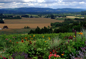 The vineyards and view at in Willamette's Dundee HIlls