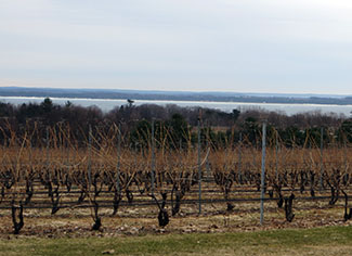 A nice view of Brys vineyard and East Traverse Bay