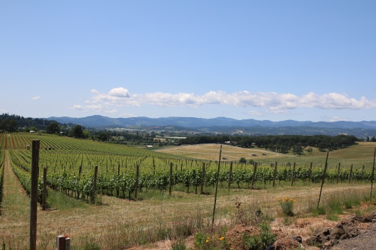 A gorgeous afternoon view of Saffron Fields Vineyards