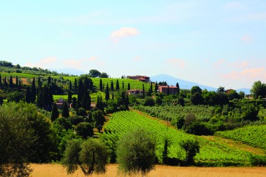 I shot this vineyard photo about 10 mi. from Montalcino