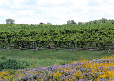 Creekbend Vineyard illustrates what Indiana can do with wine grapes.