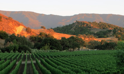 Stunning sunset over the mountains/vineyards of Happy Canyon in Santa Barbara Co., Calif.